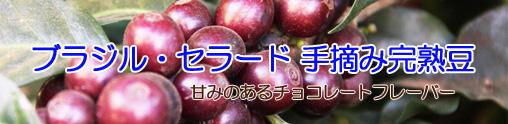 ブラジル・手摘み完熟豆